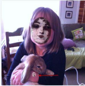 elli-rabbit